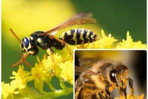 Użądliła cię osa lub pszczoła? Spokojnie, nie ma powodu do paniki