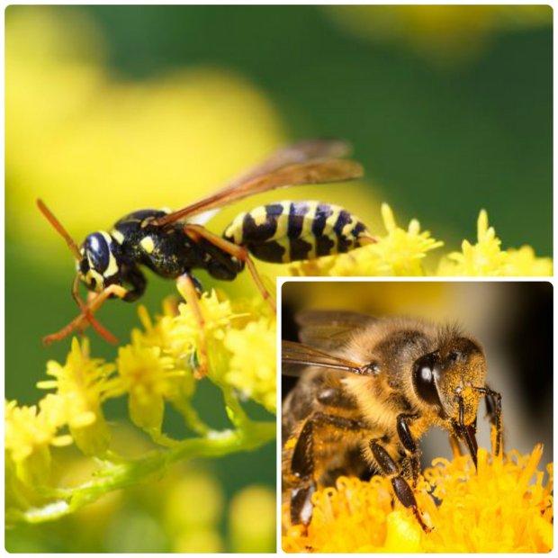 U��dli�a ci� osa lub pszczo�a? Spokojnie, nie ma powodu do paniki