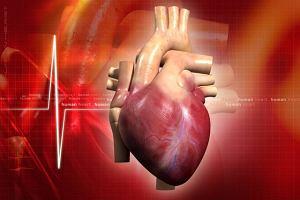 Serce: budowa i choroby serca