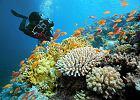 Co łączy człowieka z rafą koralową?