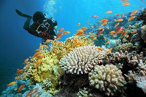 Co ��czy cz�owieka z raf� koralow�?