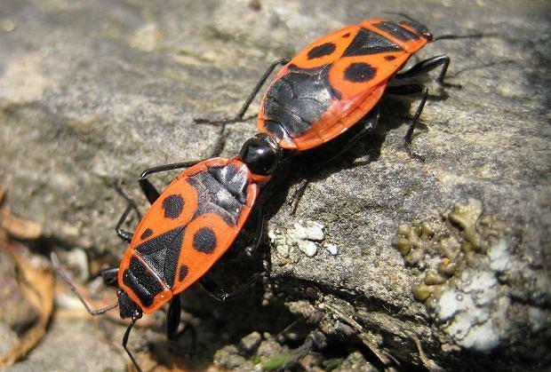 Na pewno widzieliście te owady. Ale jak one się nazywają...?