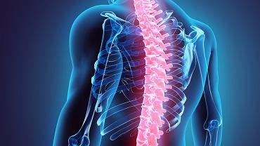 Kręgosłup zapewnia człowiekowi przede wszystkim stabilizację. To dzięki niemu możemy zachować i utrzymać wyprostowaną pozycję ciała
