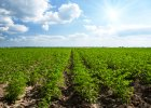 Kiedy koniec podwy�ek cen na rynku grunt�w rolnych?