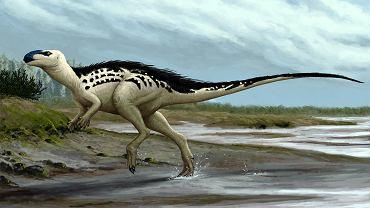 Dinozaur Burianosaurus augustai. Żył 94 mln lat temu na obszarach dzisiejszej Europy Środkowej, osiągał 3-4 m długości, żywił się roślinami