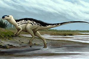 Pierwszy czeski dinozaur. Żył w czasach, gdy nasza część Europy była archipelagiem