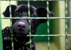 Najsmutniejsze psy w katowickim schronisku. Czekają na nowe domy [ZDJĘCIA]