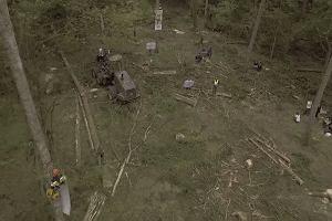 Aktywiści blokują wycinkę w Puszczy Białowieskiej. Leśnicy nie widzą drzew