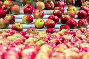 Czy polskie jab�ka pojad� do USA? Ambasador: Obiecuj�ce rozmowy
