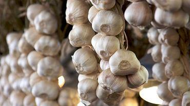 Czosnek - moc smaku, zapachu i zdrowia