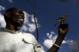 Słodka współpraca ludzi z dzikimi ptakami