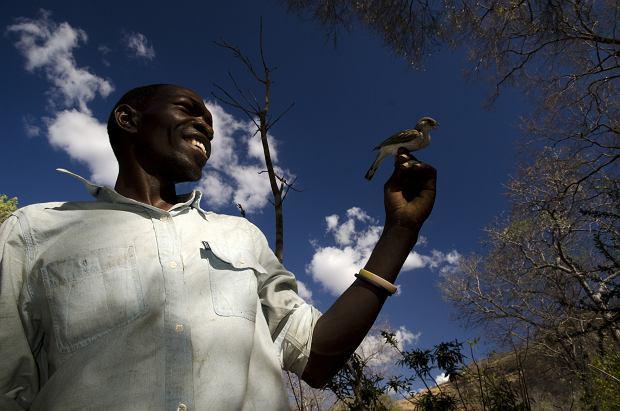 S�odka wsp�praca ludzi z dzikimi ptakami