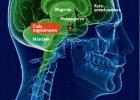 Mózgowa mitologia. Czy człowiek wykorzystuje tylko 10 proc. swojego mózgu?