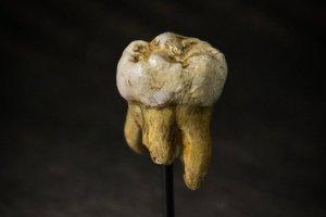 Mamy w sobie nie tylko geny neandertalczyka. Z kim jeszcze krzy�owa� si� Homo sapiens?