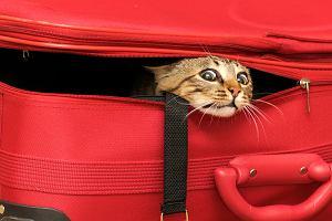 Wakacje z psem i kotem - poradnik praktyczny