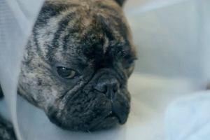 Harvey - najsmutniejszy pies �wiata