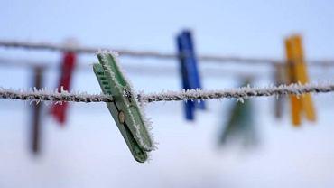 Niskie temperatury mogą nam pomóc w zwalczaniu roztoczy