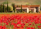 Krajobrazy pe�ne kwiatów - miejsca na �wiecie, które ton� w kwiatach