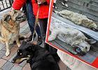 """Ukraina przed Euro. """"Władza chroni morderców zwierząt"""""""