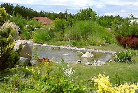 Oczyszczalnia trzcinowa. Mo�e stanowi� element kompozycji ogrodu.