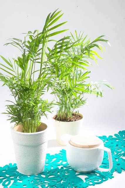Rośliny Do Cienia Do Domu I Na Balkon
