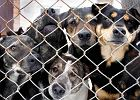 Psy uratowane za obrazy Bo�eny Wahl