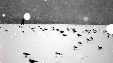 Plaża na Coney Island zimą