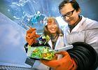 Chemia w kuchni. Świątecznej