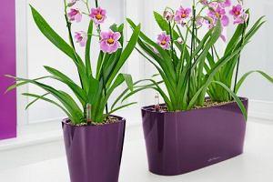 Kwiatowe prezenty na Dzień Matki