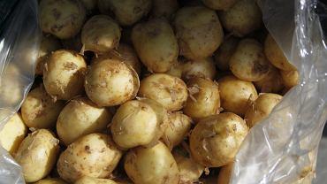 Polskie młode ziemniaki pojawiają się w sprzedaży dopiero na przełomie maja i czerwca, a zagraniczne (z Cypru, Włoch czy Izraela) już w grudniu