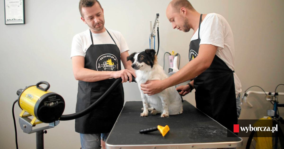 Pracę W Korporacji Zamienili Na Salon Spa Dla Psów I Kotów