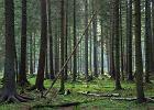 Bia�owieski Szlak Turystyczny, Bia�owieski Park Narodowy / Shutterstock