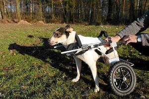 Dwa psy z Ukrainy trafiły do Przystani Ocalenie