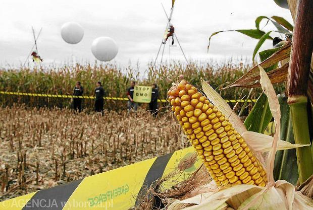 Rz�d zakaza� stosowania nasion GMO dw�ch ro�lin