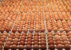 Sanepid wykrył w Polsce jajka potencjalnie skażone toksycznym środkiem