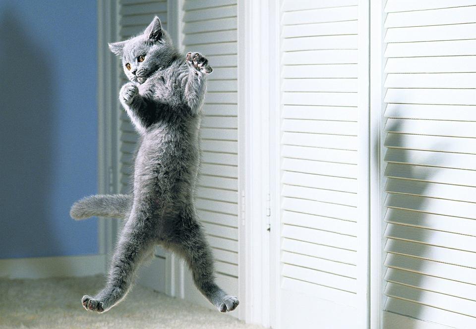 Jak Pies Z Kotem Koty Kontra Ogórki