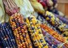 GMO jest naturalne? To nie my je wymy�lili�my