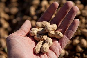 Alergia pokarmowa - przyczyny, objawy i leczenie. Które pokarmy uczulają najczęściej?