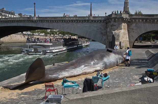 Rzeźba wieloryba nad Sekwaną