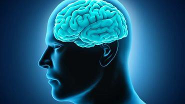 Mózg jest organem, który zawiaduje wszystkimi funkcjami organizmu. Jak działa?