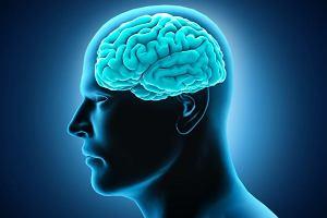 Mózg - centrum dowodzenia organizmu