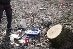 Żeby drzewa rosły trzeba posadzić szyszkę