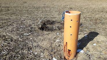 Na polu za Żukowem ktoś rozrzucił szczątki dzików. Zastawiono tzw. nęcisko na lisy.