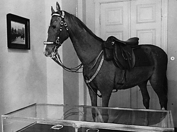 Wypchana Kasztanka stała do wojny w Belwederze. Zdjęcie z września 1938 r.