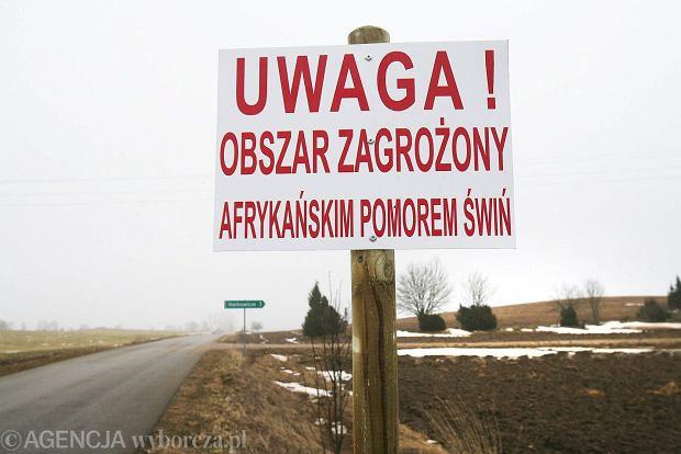 Alarm dla polskich �wi�. Tysi�ce choruj� na pom�r. Co zrobi minister rolnictwa?