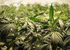 Norwegia przestanie karać narkomanów