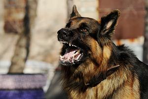 Wścieklizna - objawy, przebieg, zapobieganie