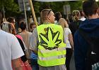 Sejm przegłosował dostęp do medycznej marihuany. Przeciw tylko Kempa i Ziobro