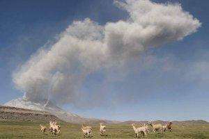 Peru ewakuuje 28 tysi�cy lam i alpak, kt�rym zagra�a wulkan