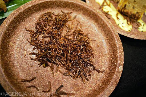 ONZ: Jedz�c wi�cej owad�w, pokonamy g��d na �wiecie